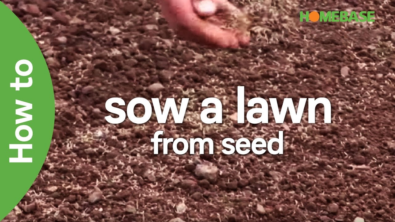 Easy Steps To Grow A Lawn From Seed
