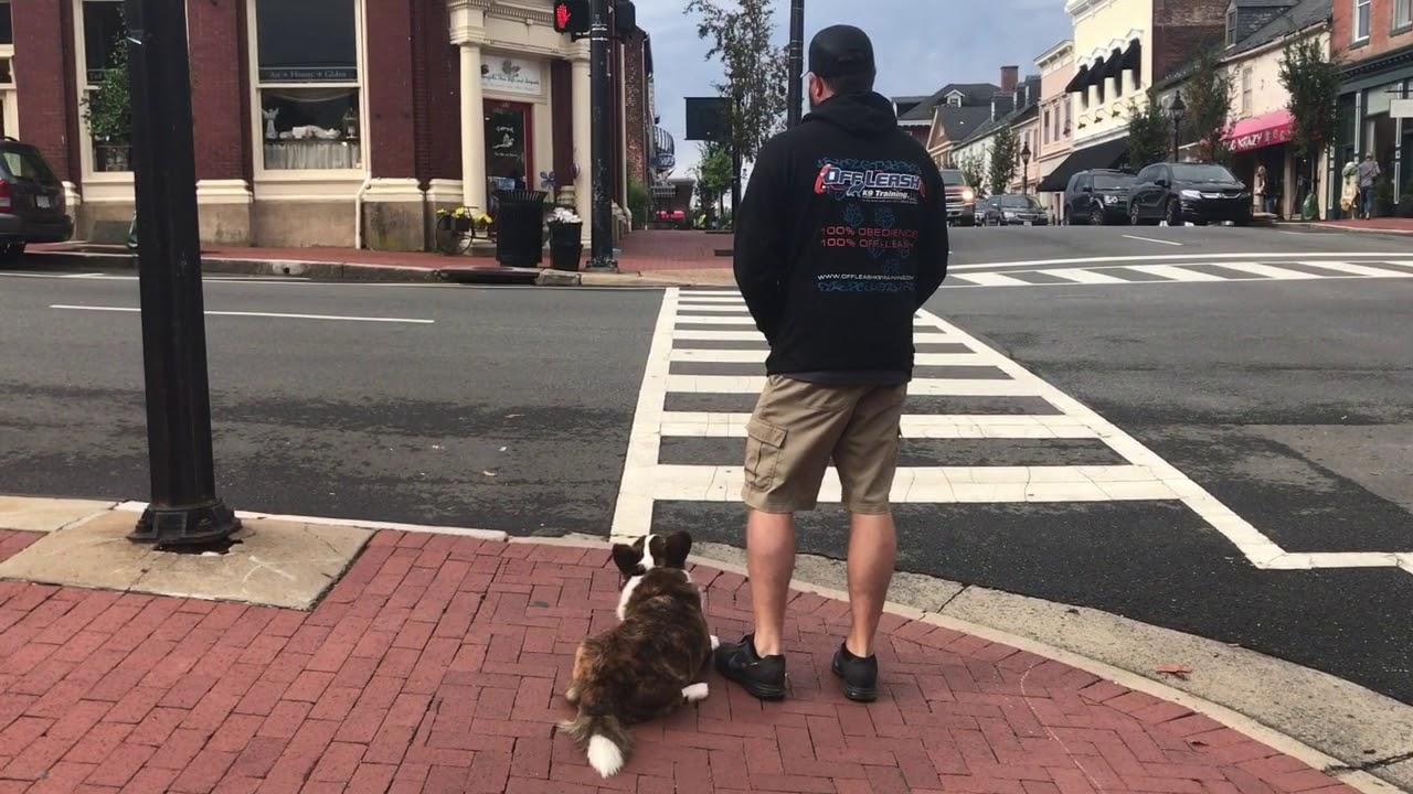 Best Dog Trainers In Fredericksburg Va