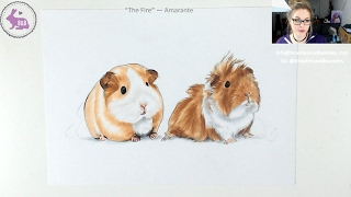 How to draw a guinea pig - LIVE Art Lesson