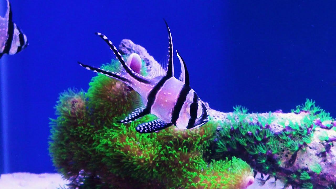 How to setup a 20 gallon nano reef tank new fish update for Nano aquarium poisson rouge