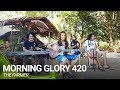 Morning Glory 420 | The Farmer (Original)
