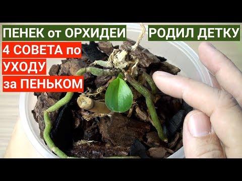 КОРНИ ОРХИДЕИ РОДИЛИ детку на пеньке 4 СОВЕТА по уходу за корнями и маленькой орхидеей