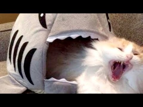 Thumbnail: Don't watch this, YOU WON'T BE ABLE TO STOP LAUGHING- The FUNNIEST ANIMAL compilation