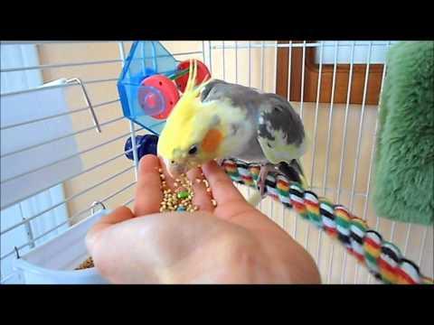 How to tame your Pet Bird