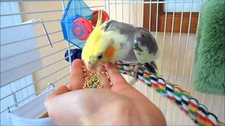 How to tame your Pet Bird