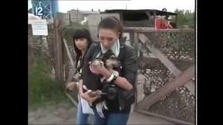 Омичи вывозили собак из приюта на Барабинской