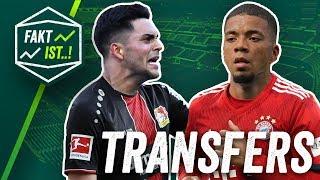 Holt Leverkusen den nächsten Hoffenheimer? Henrichs: Bayern-Bank statt Spielpraxis? Transfer News
