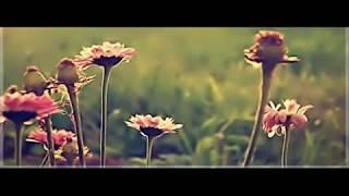 تلاوة هادئة  تريح القلب .. صوت هادئ رائع ♥♥