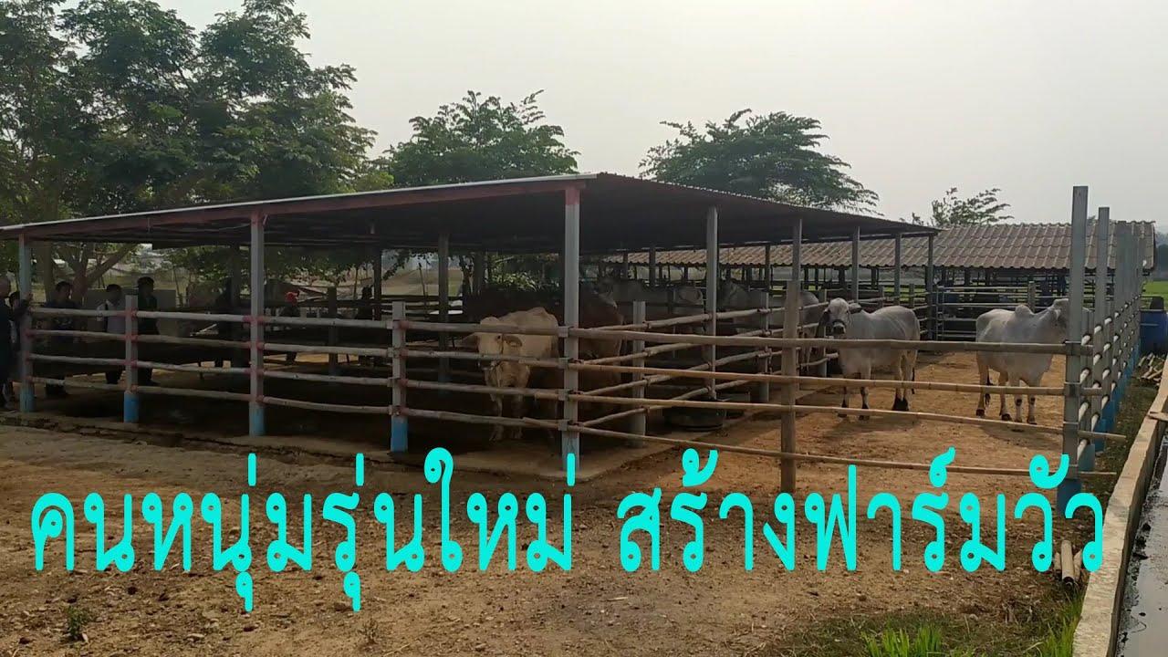 ฟาร มว วคนหน มร นใหม กล าเล ยง กล าลงท น The Young Generation Build The Ultimate Cow Farm Youtube