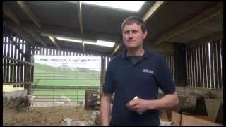Healthy Livestock Sheep Focus Farmer: David Knight - Wydon Farm