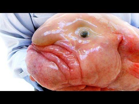 Рыба-капля - Самая причудливая рыба - Интересные факты