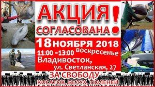NHR ♥ АКЦИЯ СОГЛАСОВАНА 18 ноября 2018 во Владивостоке!