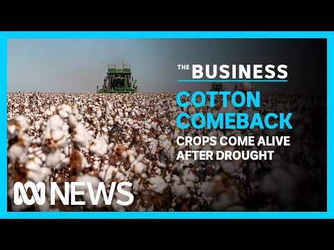 Australia's cotton industry is set for a bumper season after years of drought | The Business