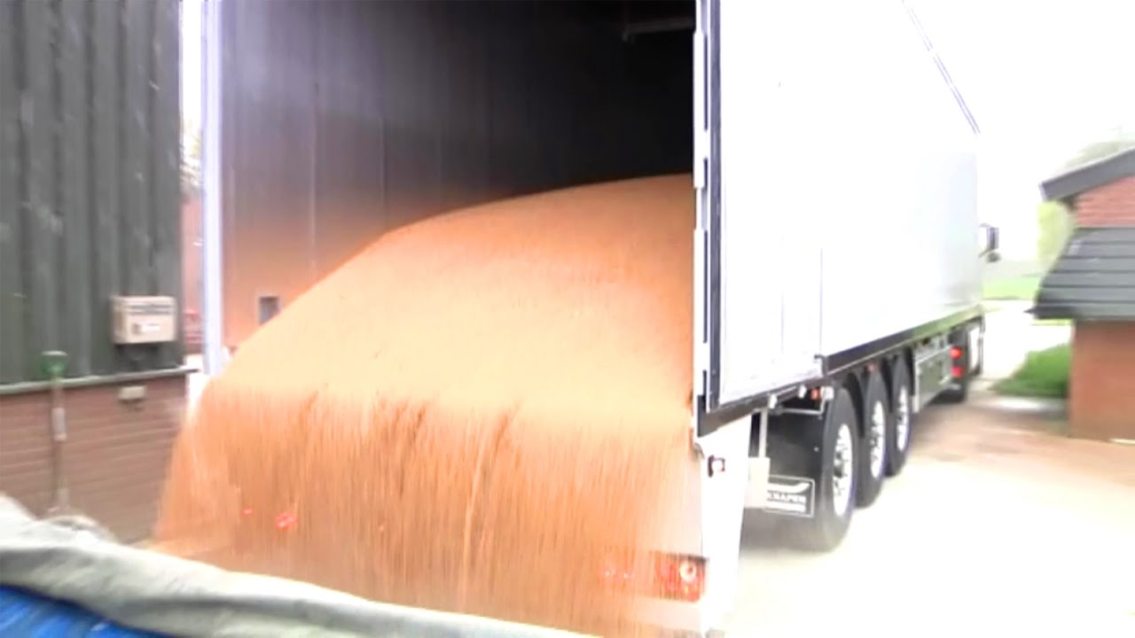 Grain in Knapen Moving Floor Trailer