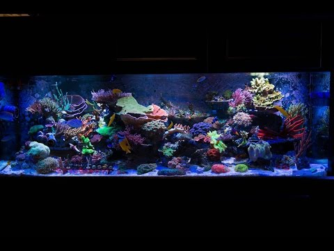 Mixed reef tank 180 gallon update 3 2015 doovi for 180 gallon fish tank