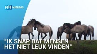 Gezonde Konikpaarden dreigen geslacht te worden