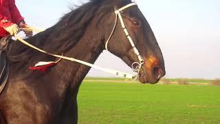 Дистанционные конные пробеги-наша жизнь)