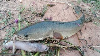 Amazing Man Catch Fish By Bottle Trap -How To catch Fishing By bottle-best Fishing Trap