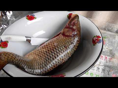Коктал из рыбы как приготовить сазана в коктальнице