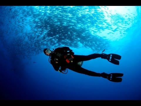 August 2015 Okeanos Aggressor - Cocos Island, Costa Rica