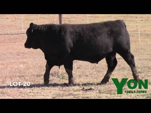 Yon Family Farms Lot 20