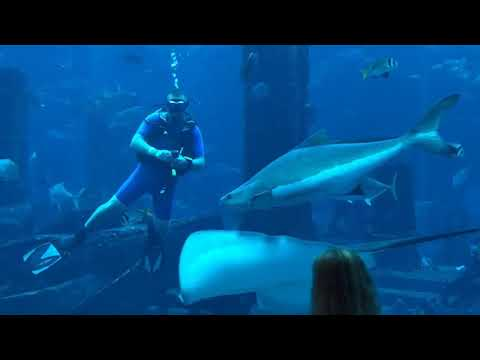 "McV Family – Papa's ""Ambassador Lagoon"" Dive, Atlantis, The Palm, Dubai 2019"
