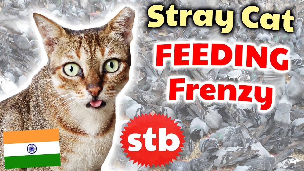 Feeding Stray Cats, Dogs, and Pigeons // Wild Animals FEEDING FRENZY in  Mumbai, India