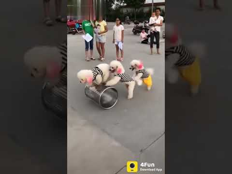 Dog's circus