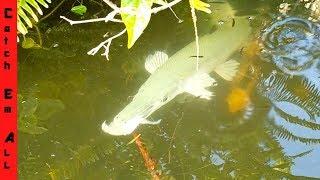 STOP BITING MY FISH! $3000 Dollar PET EATING EM ALL!