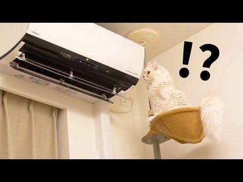 猫の前で「エアコン自動お掃除」をしてみた結果