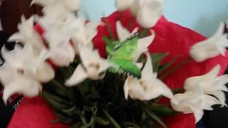 Букет с тюльпанами. Купить тюльпаны Днепр. Доставка цветов +38(095)7893483(, 2017-12-28T18:51:46.000Z)