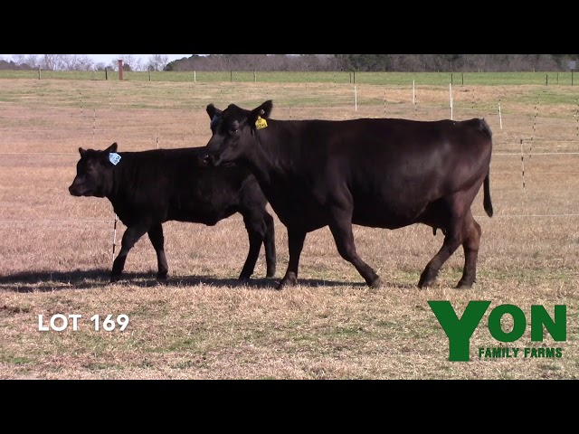 Yon Family Farms Lot 169