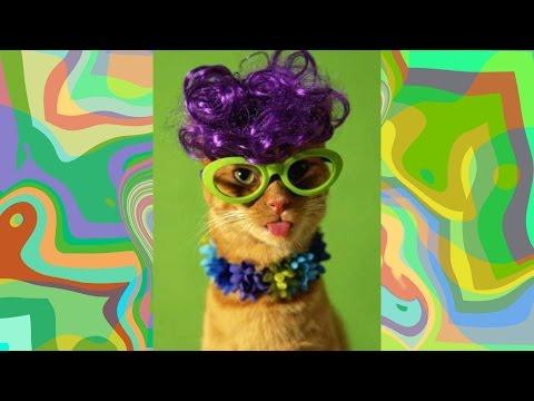 ► LUSTiGE Perücken für Katzen ► Videos Zum Totlachen