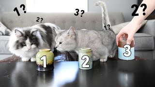 My Cats Play the SHELL CUP GAME! Will they find the treat?