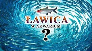 ŁAWICA w Akwarium 🐟 RYBY ławicowe i ich MAGIA✨