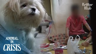 For This Dog, Death Is The Only Escape From His Abusive Owner (Part 1)   Animal in Crisis EP175
