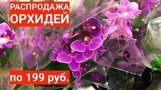 РАСПРОДАЖИ ОРХИДЕЙ весенние уценки по 199 рублей ОБЗОР из Ашан и Леруа Мерлен