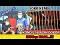 Mb Joko Kendil Kondisi Dorong Ekor Shownya Edaan  Mp3 - Mp4 Download