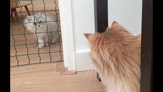 INTRODUCING TWO CATS - Smoothie meeting Milkshake