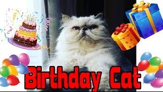 Angry Birthday Cat - Two Stupid Cats  Ep 15