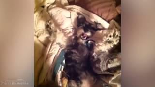 Смешные собаки-Funny Dog
