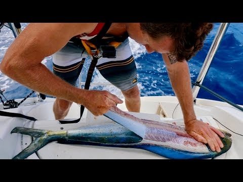 FILLETING BASICS | Catch And Cook | Mahi Mahi, Tuna, Walu, Wahoo