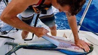 filleting-basics-catch-and-cook-mahi-mahi-tuna-walu-wahoo