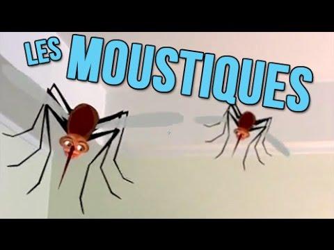 Bon Anniversaire Humour Video