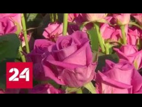 Цветочное настроение: 8 марта цены взлетают более чем в 1,5 раза - Россия 24