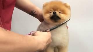 Cute Dog and Puppies Haircut 2019