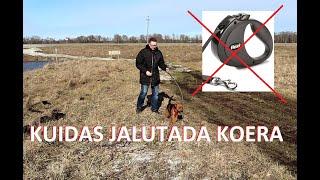 Õpetame koera rihmaga jalutama