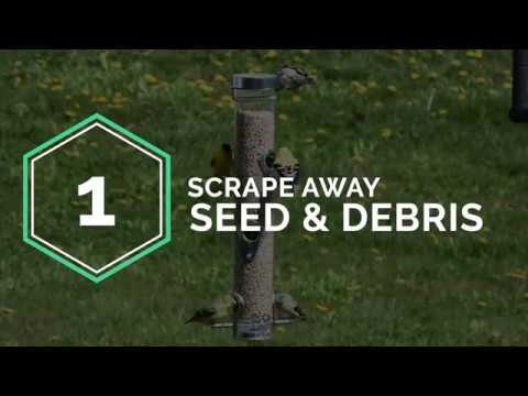 how-to-clean-your-bird-feeder