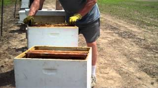 How To Split A Beehive Easiest Method By Tim Durham