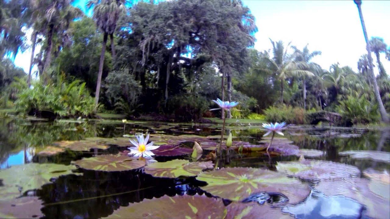 Mckee botanical gardens vero beach fl youtube - Mckee botanical gardens vero beach ...